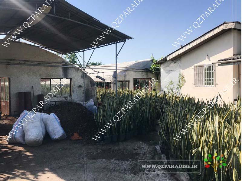 در صورتی که عکس گلخانه گیاهان آپارتمانی حسین آصفی نمای ورودی نمایش داده نشد با تیم پشتیبانی مجموعه پارادایس هماهنگ نمایید .