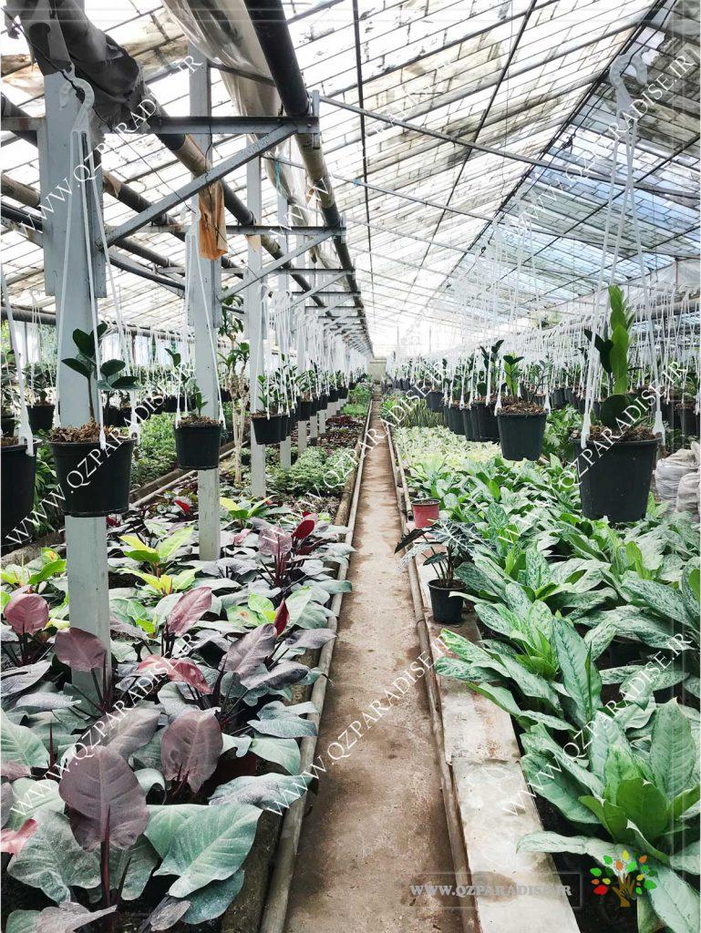 در صورتی که عکس گلخانه گیاهان آپارتمانی رمضانی نمای غربی لاین سه نمایش داده نشد با تیم پشتیبانی هماهنگ شود.
