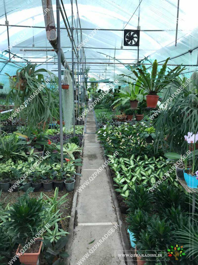 گلخانه گیاهان آّپارتمانی گلبن