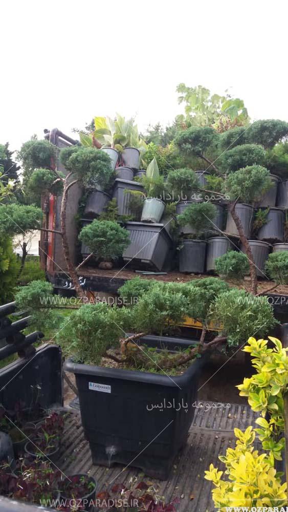 گیاهان فضای باز طالشی