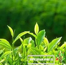 گیاه، کودک دانشمند-قسمت20