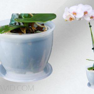 گلدان زیبا پارادایس