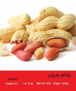 بذر بادام زمینی Peanut