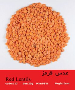 بذر عدس قرمز Red Lentils