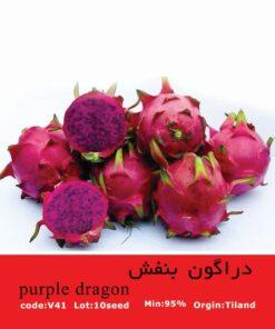 بذر میوه دراگون بنفش purple_dragon
