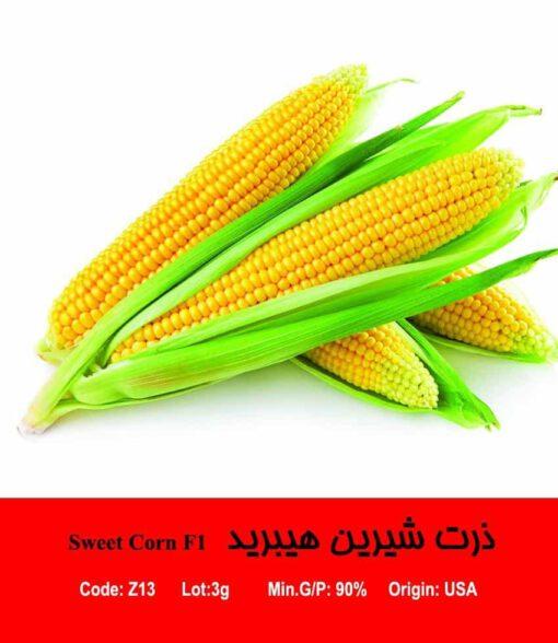 بذر ذرت شیرین هیبرید Sweet Corn F1