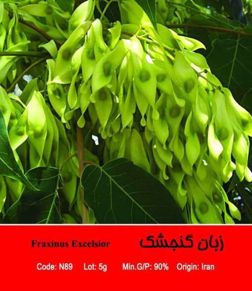 بذر درخت زبان گنجشک Fraxinus Excelsior