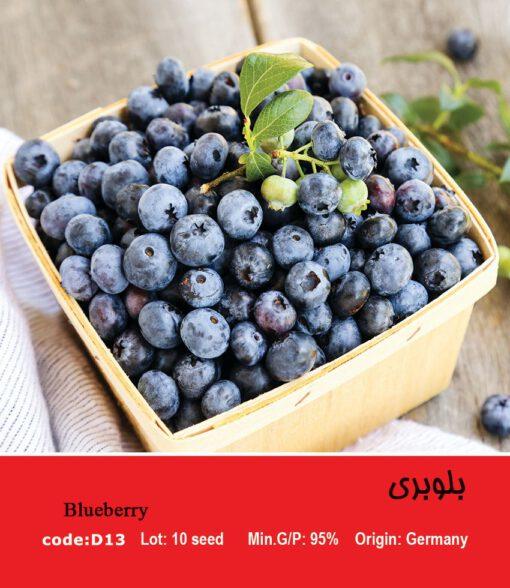 بذر میوه بلوبری Blueberry