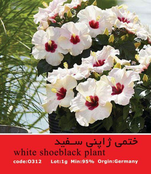 بذر گل ختمی ژاپنی سفید White Shoeblack Plant