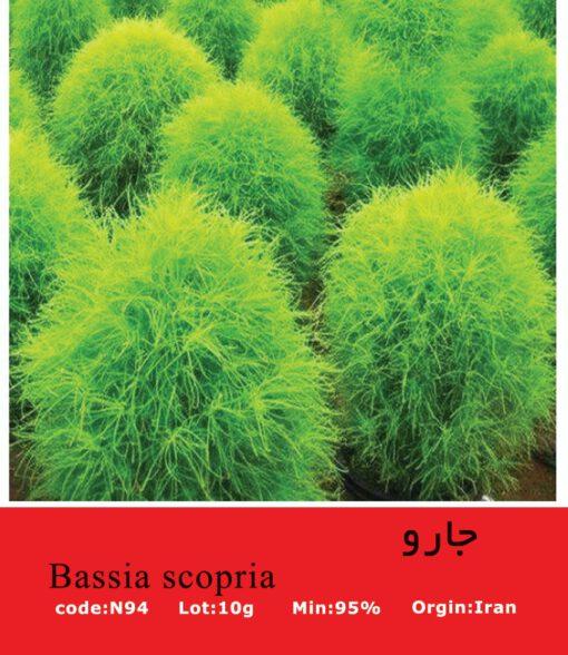 بذر گیاه جارو Bassia Scopria