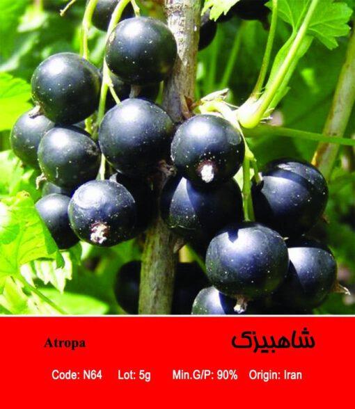 بذر گیاه شاهبیزک Atropa