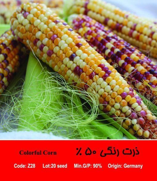 بذر ذرت رنگی 50 درصد Colorful Corn
