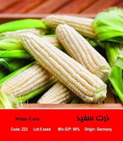 بذر ذرت سفید White Corn