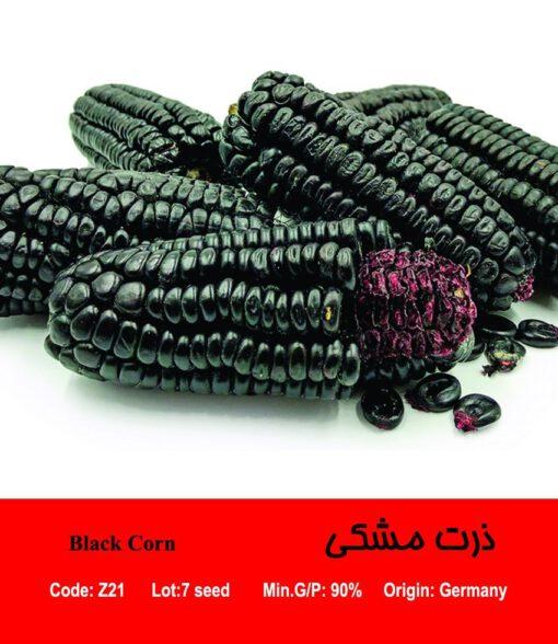 بذر ذرت مشکی Black Corn
