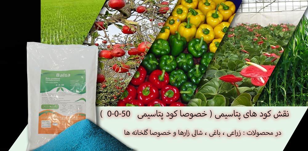 فواید پتاسیم برای گیاه و تاثیر آن بر خاک نقش کود های پتاسیمی خصوصا کود پتاسیمی 50 0 0 در محصولات زراعی باغی شالی زارها و خصوصا گلخانه ها