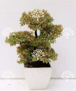 درختچه مصنوعی درجه یک AFN116 با بالاترین کیفیت