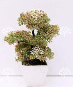 انواع درختچه با بالاترین کیفیت به صورت مصنوعی قیمت مناسب